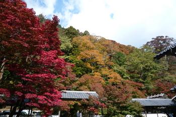 開山お手植え紅葉付近
